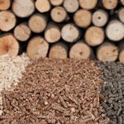 Varie tipologie di biomasse legnose