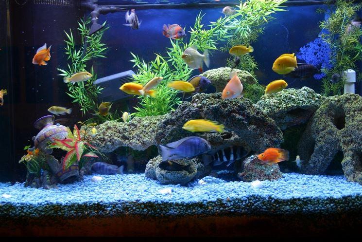 Acquario allestito con pesci