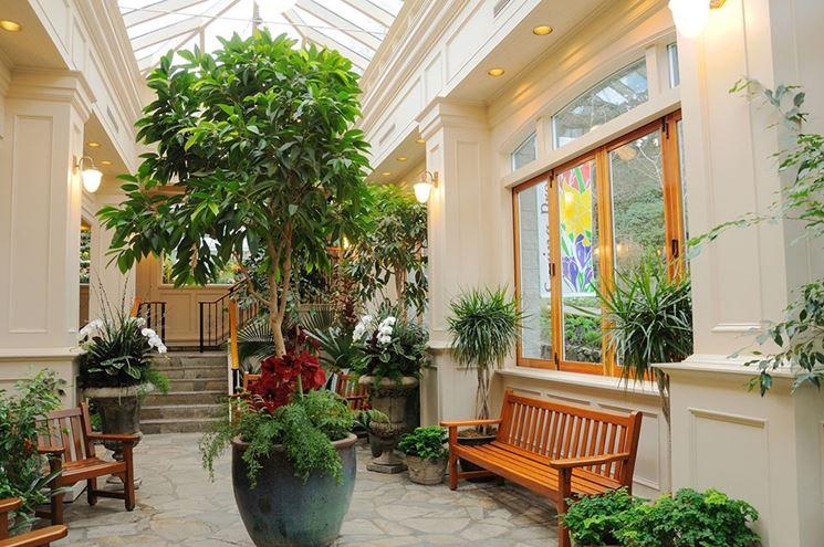Casa verde e piante da appartamento