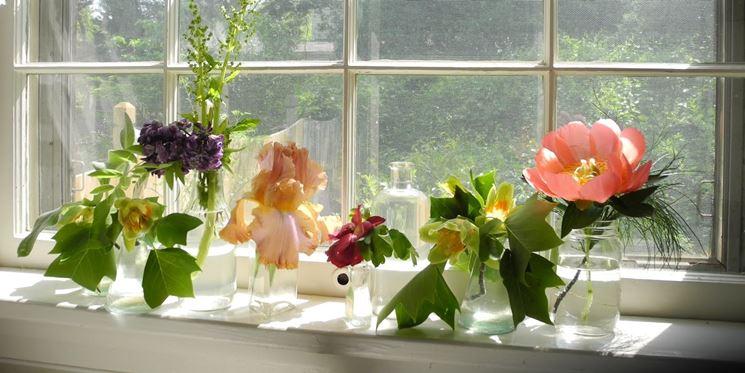 fiori su davanzale finestra