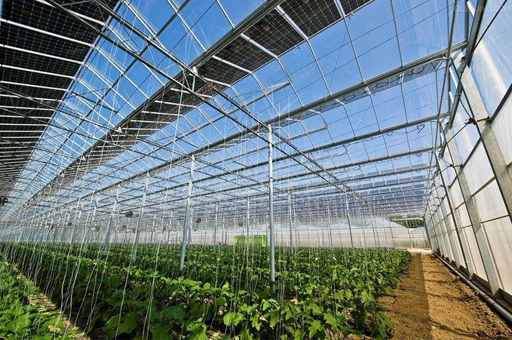 Serra fotovoltaica agricola