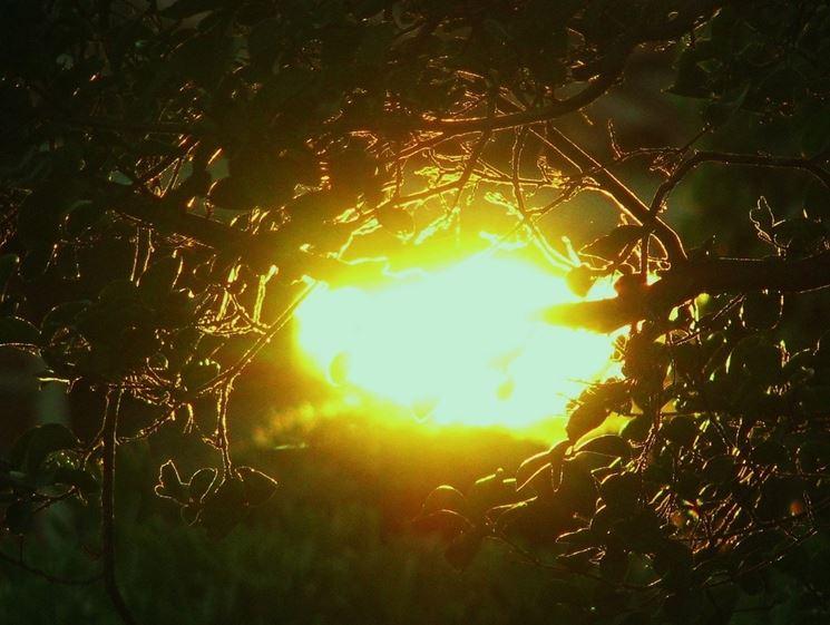 Sole energia