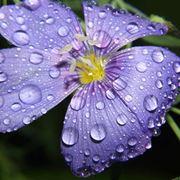 Acqua elemento vitale vegetazione