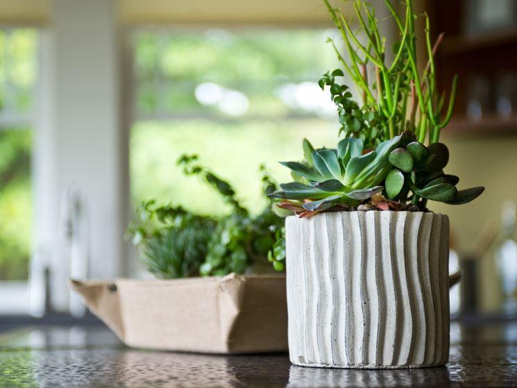 Arredare piante grasse
