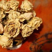 Rose petali
