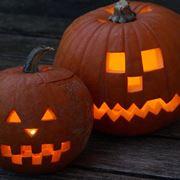 Essiccazione Zucca Di Halloween.Zucche Ornamentali Giardino Decorare Con Le Zucche Ornamentali