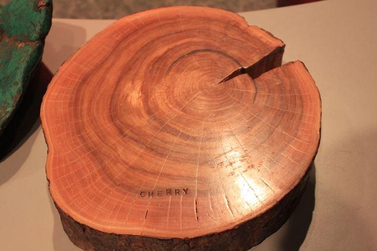 tronco legno ciliegio
