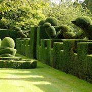 Arbusti forme varie