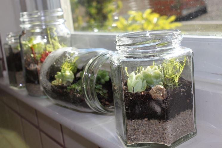 Differenti tipologie di piante in bottiglia