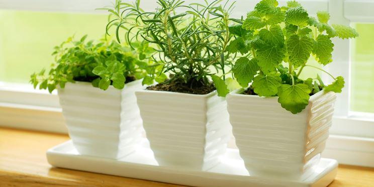 Alcune piante in casa