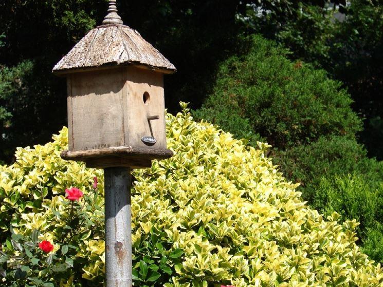 Semplice casetta per uccelli