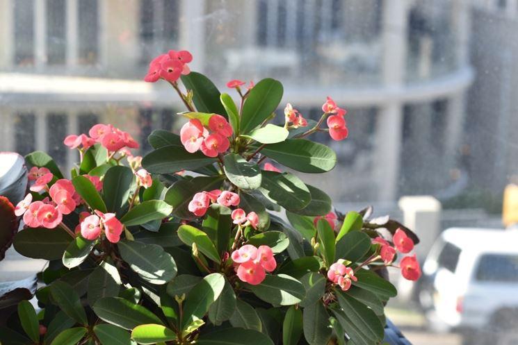 Balcone con piante da fiori