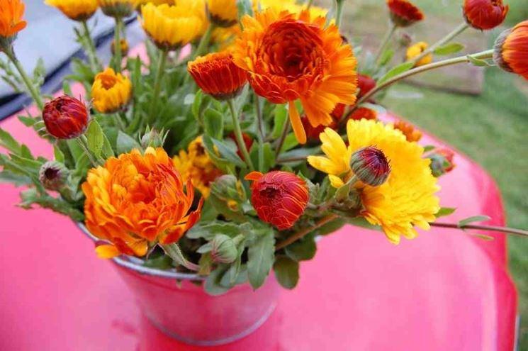 Fiori di calendula in vaso