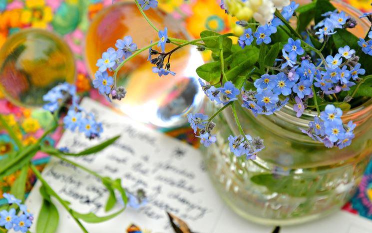 Vaso di fiori non ti scordar di me