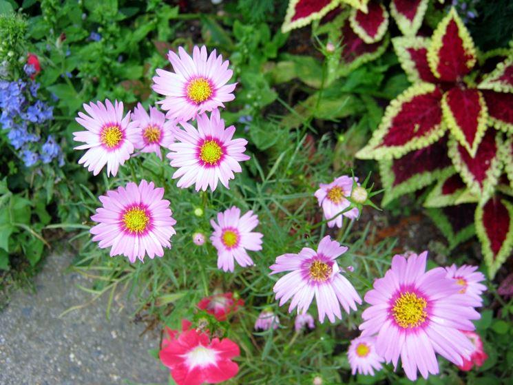 Piante da giardino con fiori fiori piante fiorite per for Fiori primaverili da giardino