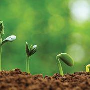 Germogli in crescita