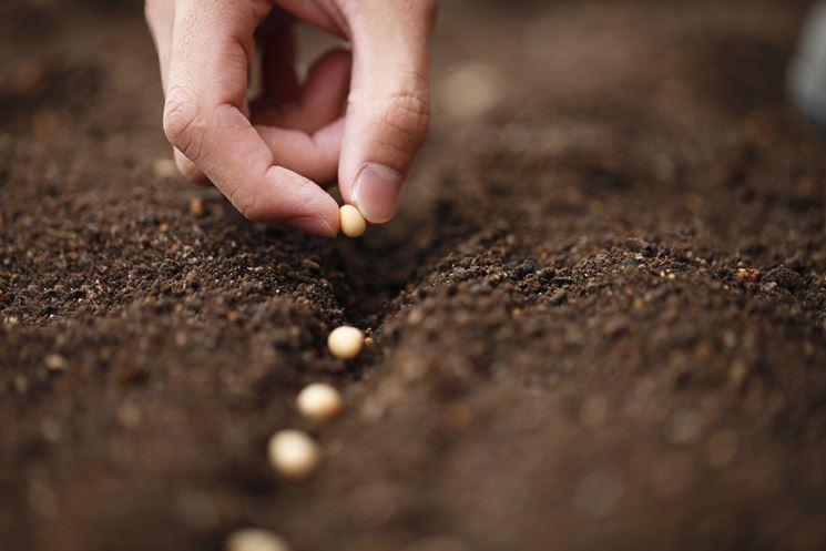 La semina nell'orto