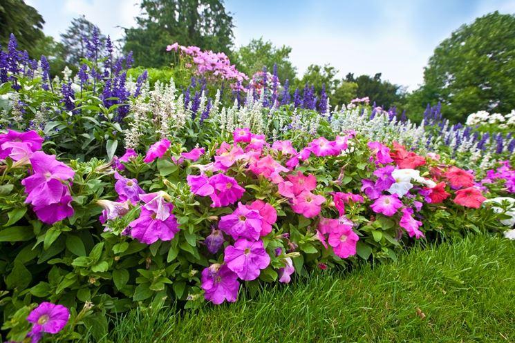 Bordura di piante da fiore