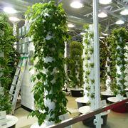 Coltivazione aeroponica in serra