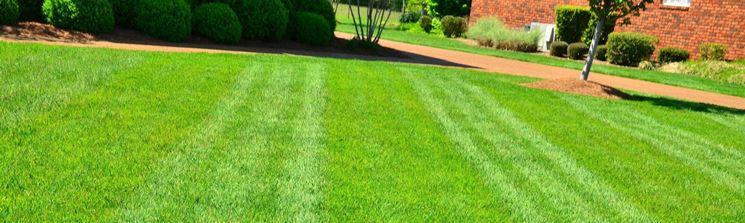 Come seminare il prato giardino semina prato - Quando seminare erba giardino ...