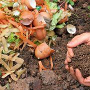 Il compost durante la sua formazione