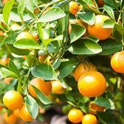 Fertilizzazione delle piante da frutto