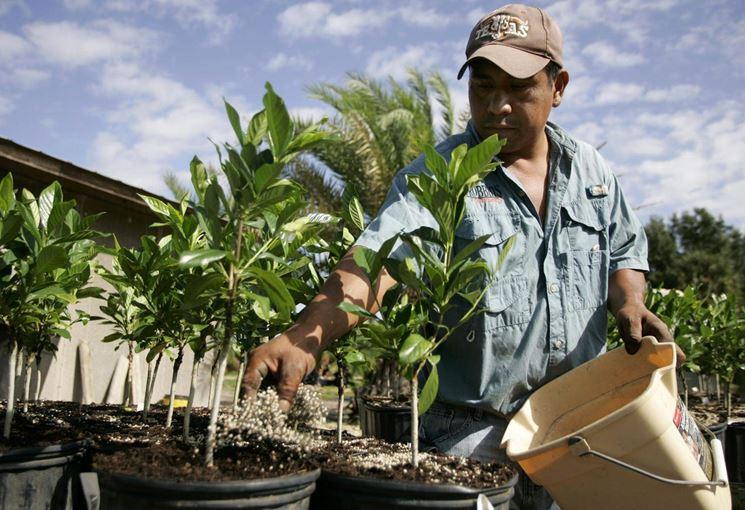 Concimazione piante da frutto giardino come concimare - Piante da frutto in giardino ...