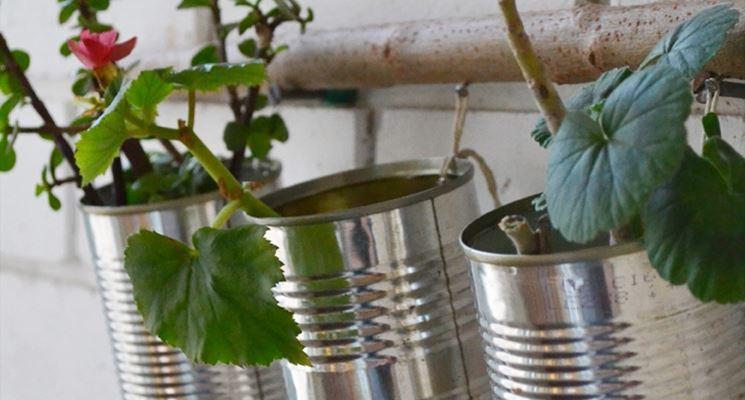 Semplici lattine usate come contenitori per piante