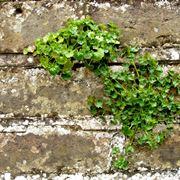 Erbacce negli anfratti di un muro