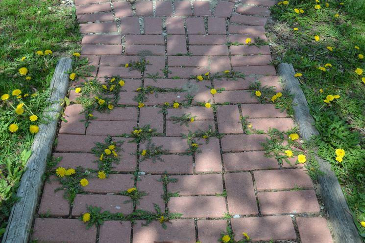 Un vialetto invaso dalle erbacce
