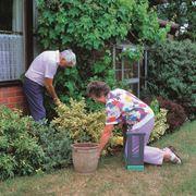 Giardinaggio fai da te