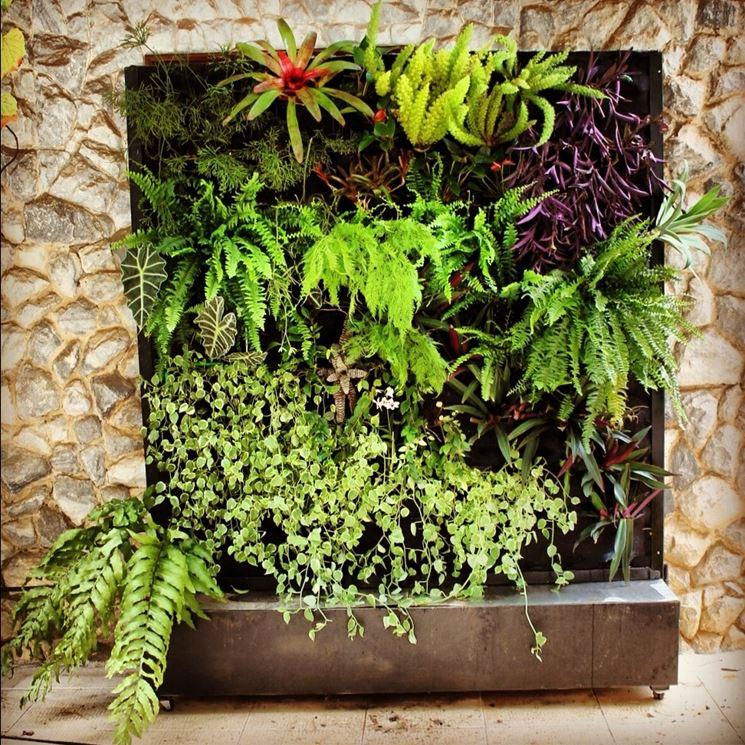 Esempio di giardino verticale