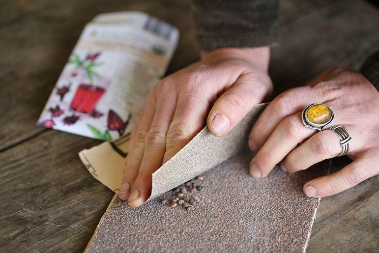 Scarificare i semi con carta vetrata
