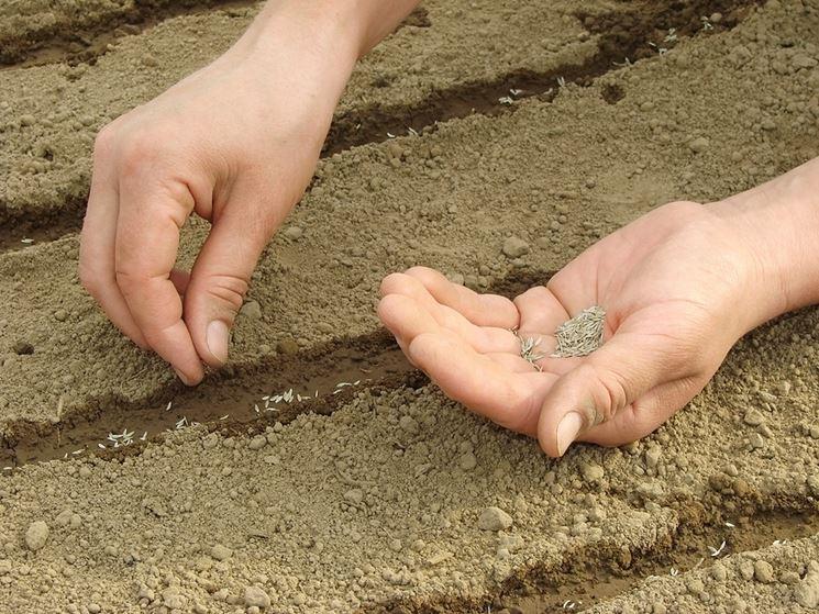 Semina in piena terra
