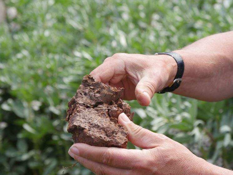 Terreno in cui è presente l'argilla