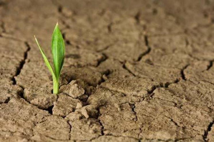 Crepe in un terreno argilloso