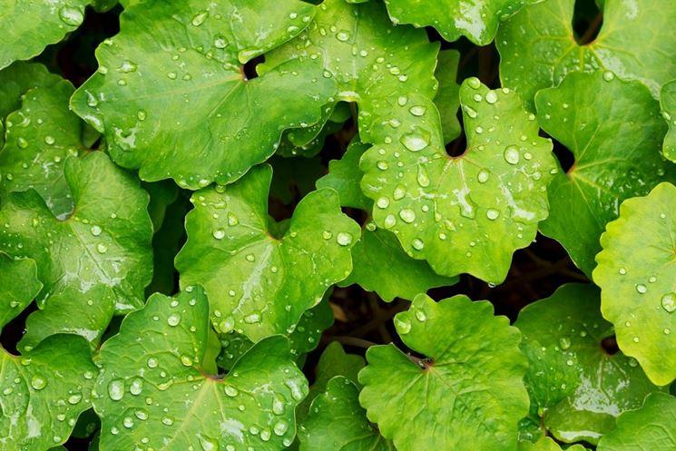 Esempio di foglie bagnate