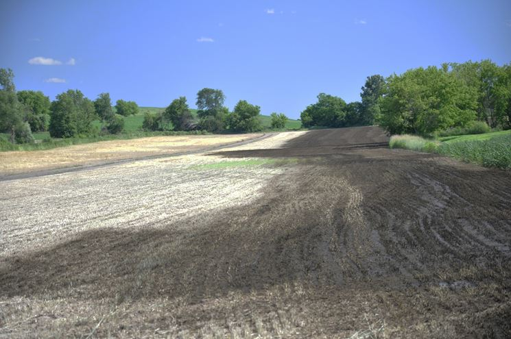 Un campo concimato