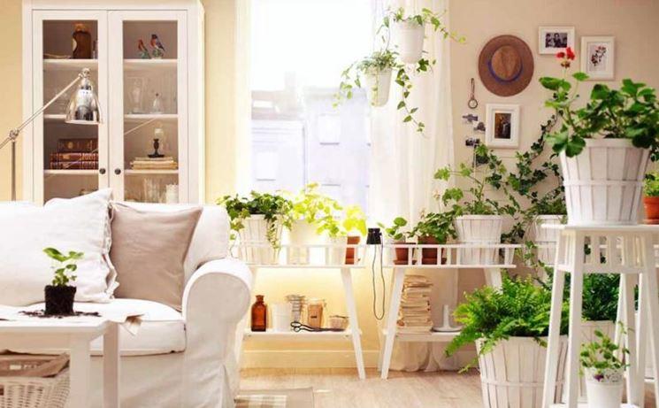 Le piante come purificatori dell'aria