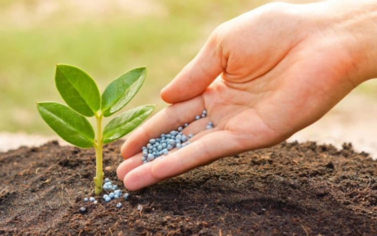 Fertilizzante in grani