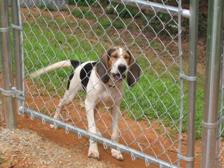 Recinti per cani fai da te recinzioni giardino recinto per cani - Recinti in legno da giardino ...