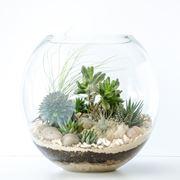 Terrarium in contenitore di vetro