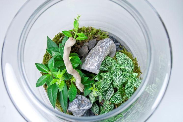 Terrario con piante tropicali