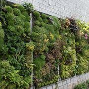 Giardino verticale all'aperto