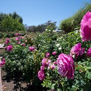 Inez Grant Parker Memorial Rose Garden California