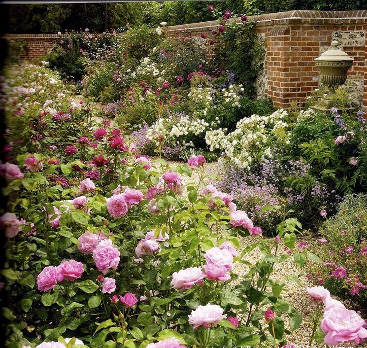 Tipico giardino inglese di rose