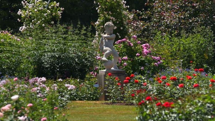 giardino con rose fiorite