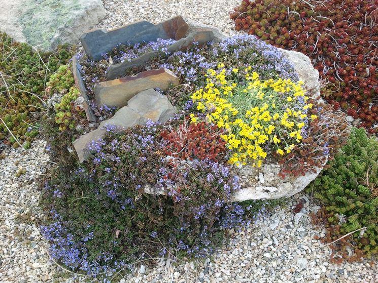 Piccolo giardino roccioso