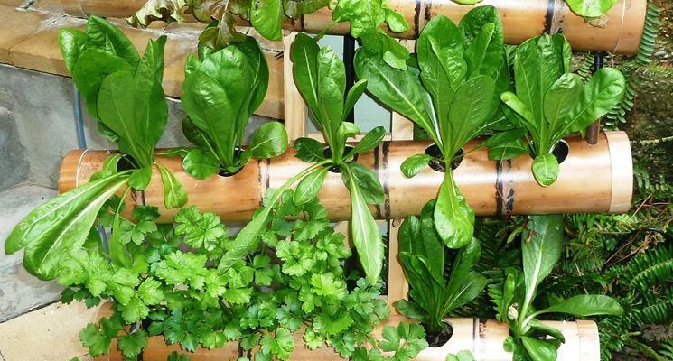 Giardino verticale fai da te - Stili di giardini - Giardino verticale