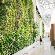 Esempio di parete verde